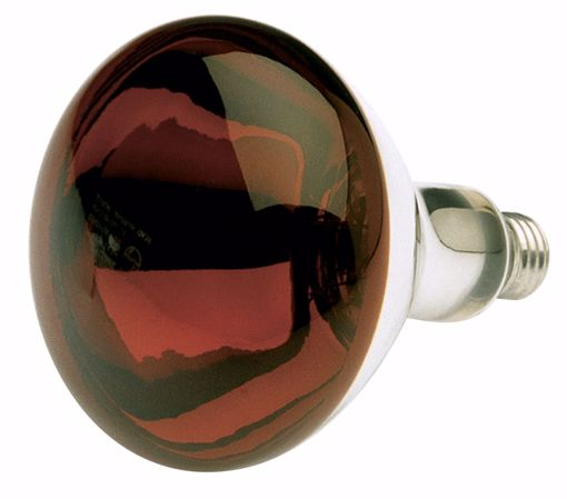 Picture of SATCO S4884 250R40/HR/TF SHATTER PROOF RED Incandescent Light Bulb